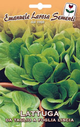 Laitue couper feuille ronde - Salade a couper qui repousse ...