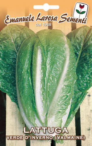 Graine de laitue princesse d 39 hiver - Variete de salade d hiver ...