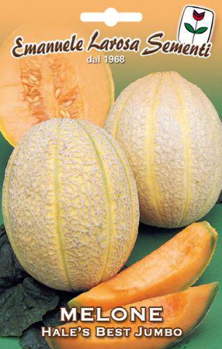 Graine de melon rugueux long - Quand cueillir un melon ...