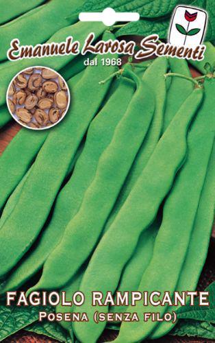 Haricot vert mangetout rame vari t de posena - Variete de haricot vert ...