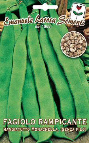 Haricot vert mangetout rame vari t de monachella - Variete de haricot vert ...