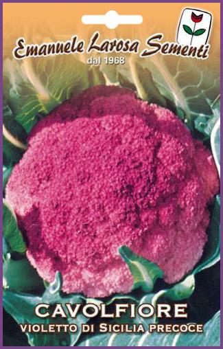 Chou Fleur Violet Precoce De Sicile