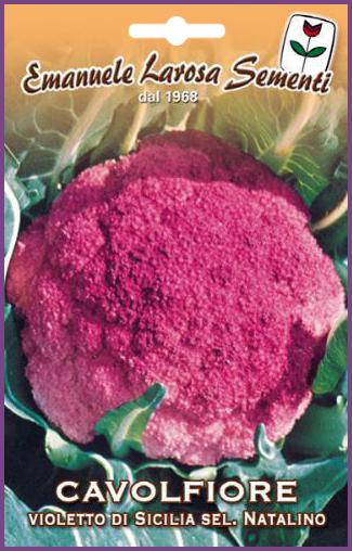 Chou Fleur Violet De Sicile D Hiver