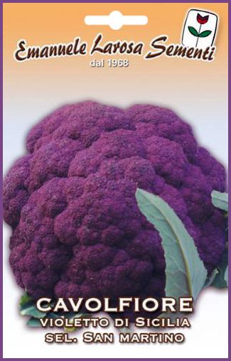 Chou Fleur Violet Fonce De Sicile