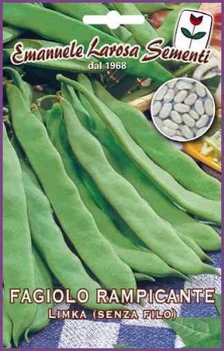 Haricot vert plat limka - Variete de haricot vert ...